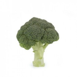 crop_9332_Broccoli